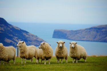 【NZD/USD】はるかぜのトラリピ 設定公開その②-ニュージーランドドル/米ドル 編